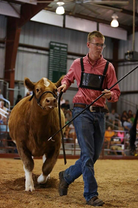 CHS students make big show at county fair